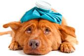 ветеринарная клиника в москве