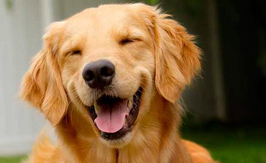 кастрация собак москва