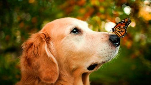 Процедура стерилизации собаки