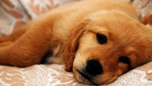 Понос с кровью у собак