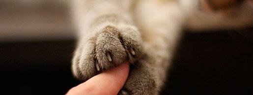 усыпление кошек и собак