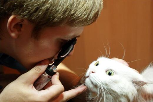 Ветеринар Офтальмолог